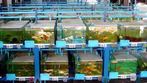 V.aquarium-Farm