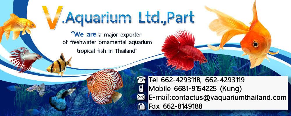 A leading exporter of freshwater aquarium fish in Thailand
